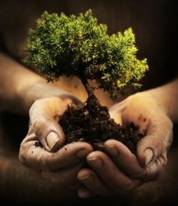 treehand